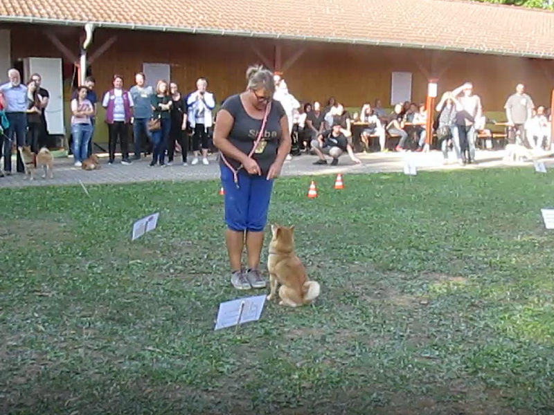 Aktionstag 2018 - Rally Obedience